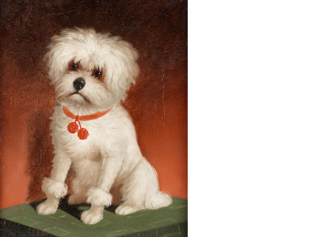 English School, 19th century A Bichon Frisé with a red collar 10 1/2 x 8 1/2in. (26.5 x 21.5cm.)