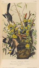 AUDUBON, JOHN JAMES. 1770-1851. The Birds of America, from Drawings Made in the United States and Their Territories. New York: V.G. Audubon/Roe Lockwood & Son, 1860.