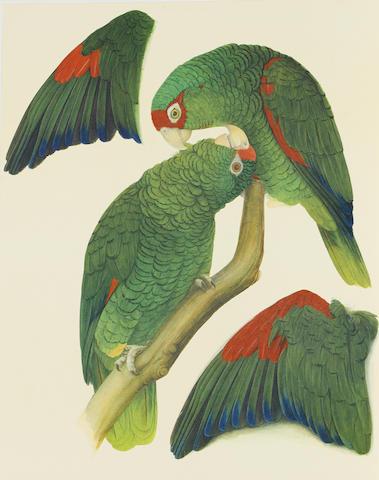 LOW, ROSEMARY. Amazon Parrots. London: Rodolphe d'Erlanger/The Basilisk Press, 1983.