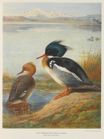 MILLAIS, JOHN GUILLE. 1865-1931. British Diving Ducks. London: Longmans, Green and Co., 1913.
