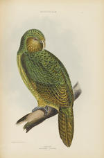 GRAY, GEORGE ROBERT. 1808-1872. The Genera of Birds: Comprising Their Generic Characters, a Notice of the Habits of Each Genus, and an Extensive List of Species Referred to Their Several Genera. London: Longman, Brown, Green, and Longmans, [1844]-49.