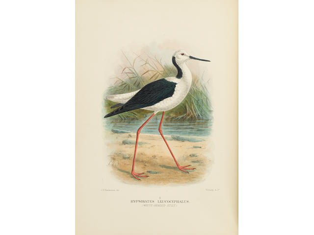 MATHEWS, GREGORY MACALISTER. 1876-1949. The Birds of Australia...   [WITH]: The Birds of Norfolk & Lord Howe Islands and the Australasian South Polar Quadrant. London: Witherby & Co., 1910-28.