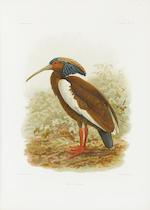 MILNE EDWARDS, ALPHONSE, and ALFRED GRANDIDIER. Histoire physique, naturelle et politique de Madagascar. Volume XII [-XV]. Histoire naturelle des oiseaux. Paris: L'Imprimerie Nationale, 1876-85.