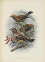ROTHSCHILD, LIONEL WALTER. 1868-1937. The Avifauna of Laysan and the Neighbouring Islands: with a Complete History to Date of the birds of the Hawaiian Possessions. London: R.H. Porter, 1893-1900.