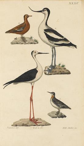 BREHM, CHRISTIAN LUDWIG. 1787-1864. Handbuch der Naturgeschichte aller Vögel Deutschlands. Ilmenau: Druck und Verlag von Bernh. Friedr. Voight, 1831.