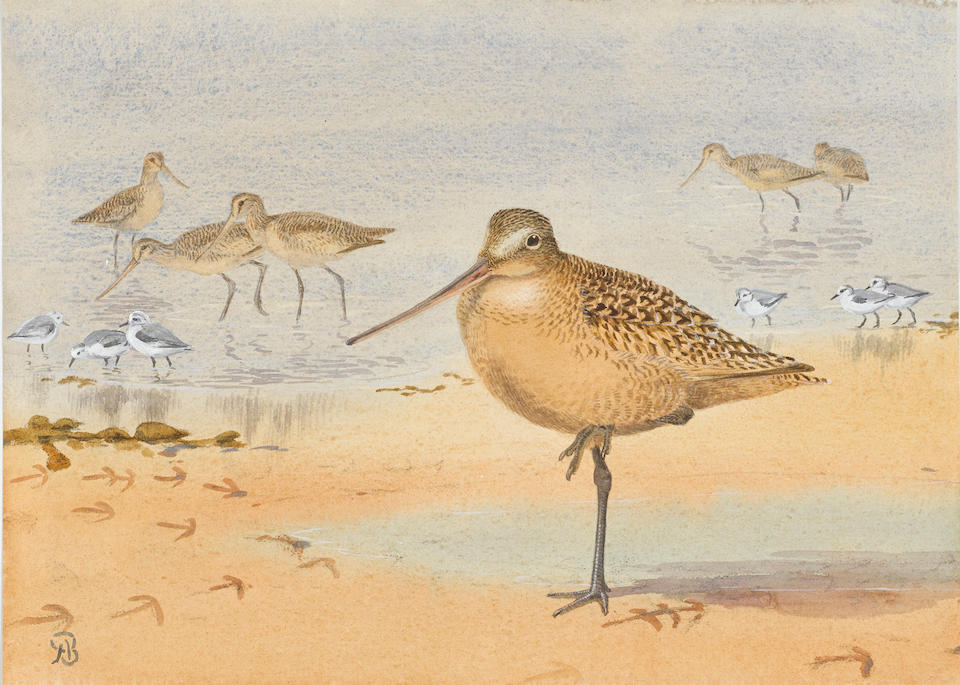BROOKS, ALLAN CYRIL. 1869-1946. 2 original watercolors on paper, with touches in white: