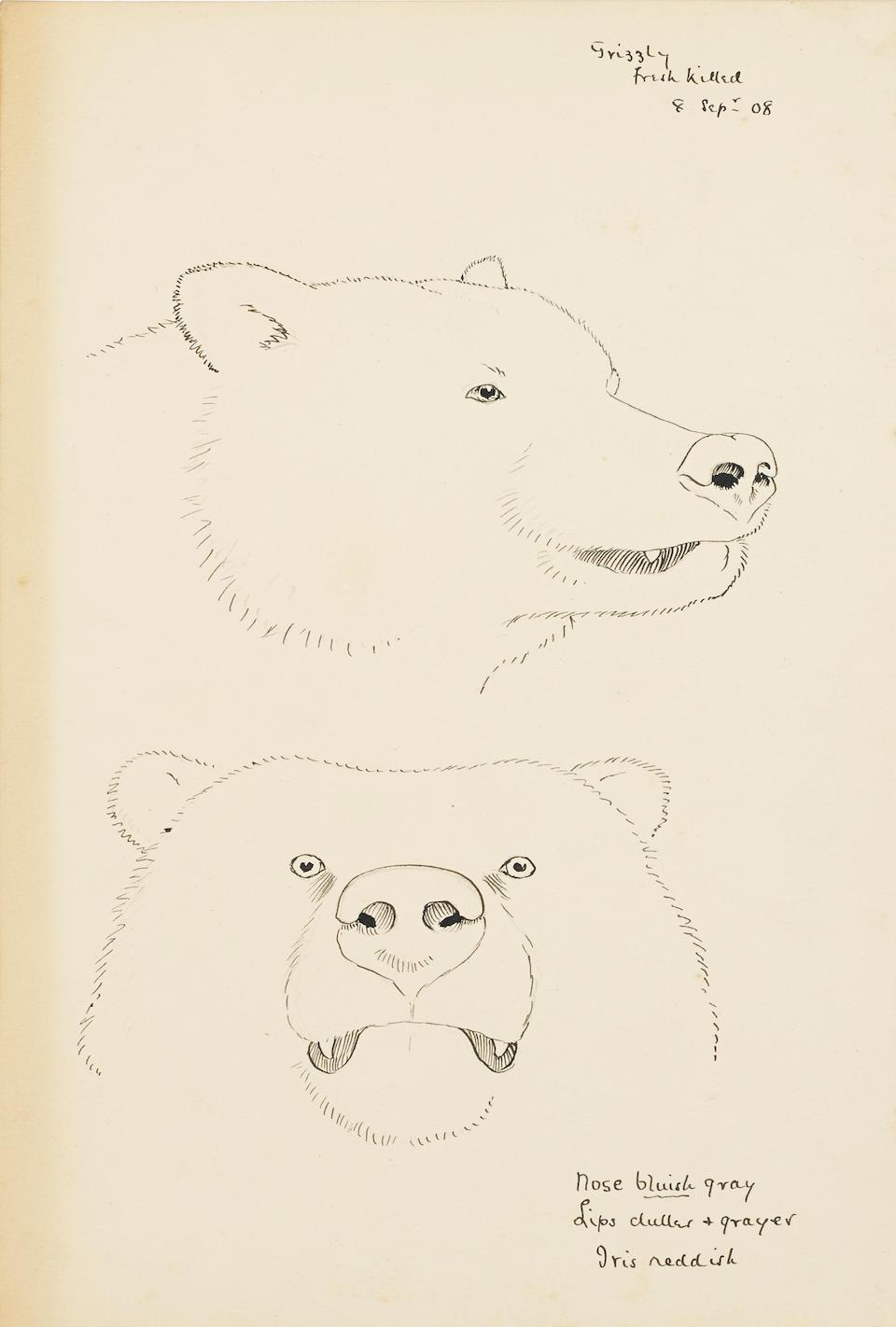 BROOKS, ALLAN CYRIL. 1869-1946. 9 original illustrations, 1909-c.1923, including: