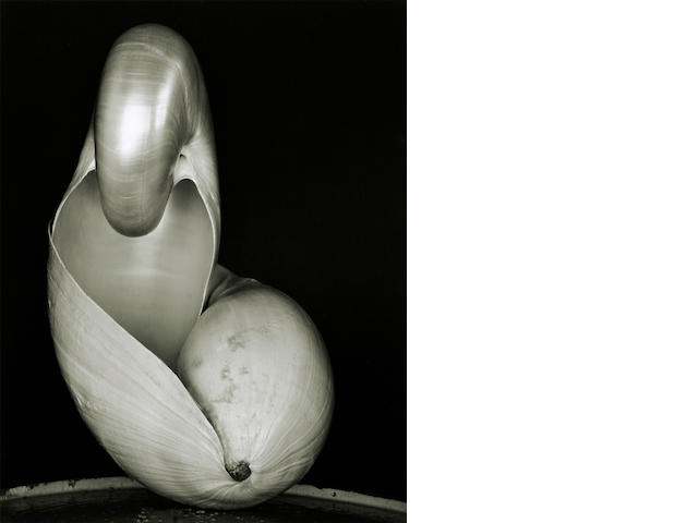 Edward Weston (1886-1958); Shell;