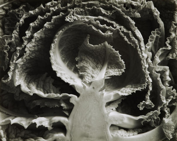 Edward Weston (1886-1958); Kale Halved;