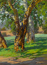 Paul A. Grimm (American, 1891-1974) Trees and Shadow 16 x 12in