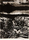 Bill Brandt (British, 1904-1983); Gull's Nest, Midsummer Eve, Isle of Skye;