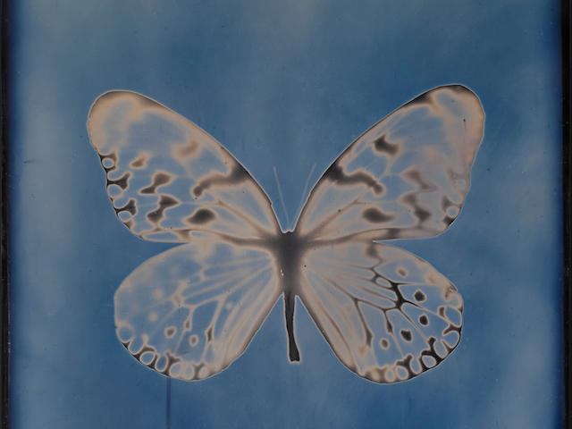 Adam Fuss (born 1961); Butterfly, from My Ghost series;