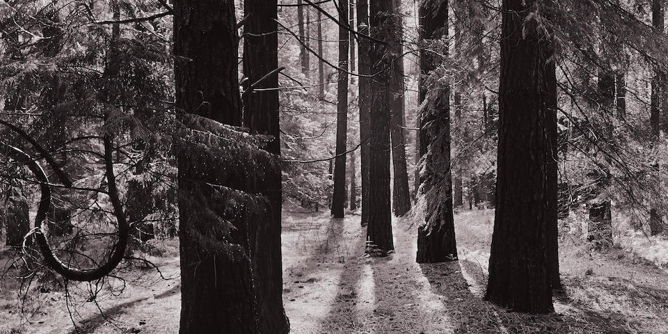 Ansel Adams (1902-1984); Forest Floor, Yosemite Valley, California;