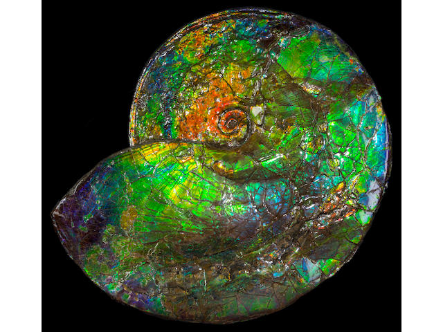 Astonishing Iridescent Ammonite with Rare Blue Coloration