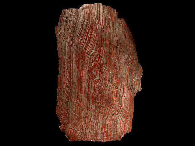 Massive Stromatolite Slab