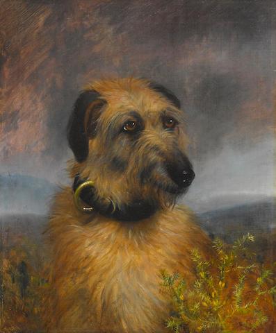 B.A. Howe (British, 19th century) Portrait of a Scottish Deerhound 24 x 20 inches (61.0 x 50.8 cm)