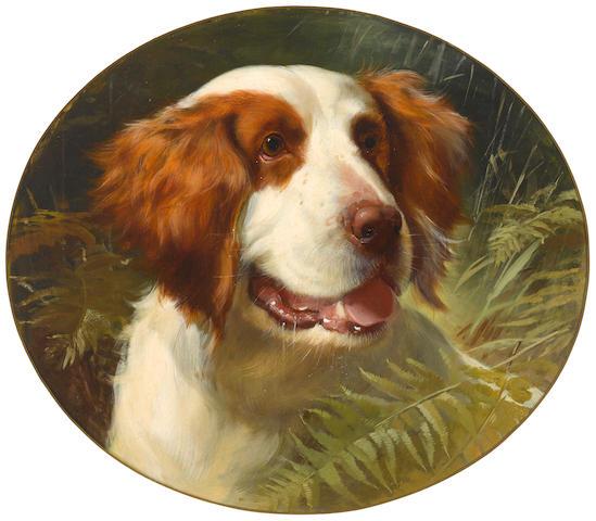 George Earl (British, 1824-1908) A Brittany spaniel sight: 14 1/2 x 16 3/4in (37 x 42.5cm)