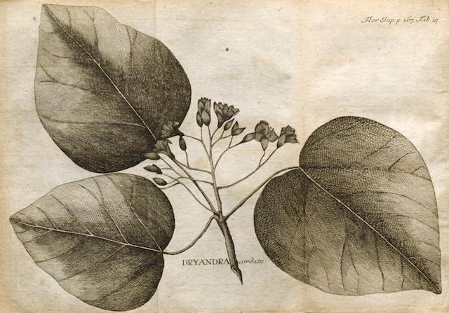 THUNBERG, CARL PETER. 1743-1828. Flora Japonica sistems plantas insularum Japonicarum. Leipzig: J.G. Muller, 1784.