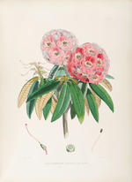 HOOKER, JOSEPH DALTON. 1817-1911. The Rhododendrons of Sikkim-Himalaya; Being an Account, Botanical and Geographical, of the Rhododendrons Recently Discovered in the Mountains of Eastern Himalaya, from Drawings and Descriptions Made on the Spot, During a Government Botanical Mission to that Country.  London: Reeve and Co., 1849-[51].