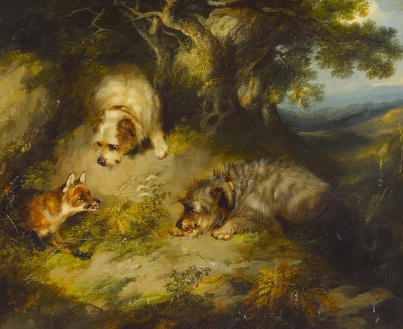 George Armfield (British, 1808-1893) Terriers approaching a fox in a wooded landscape 20 x 24in (50.8 x 61cm) (Painted in 1853)