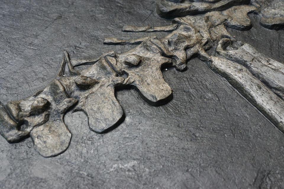 Wonderful Jurassic Crocodile