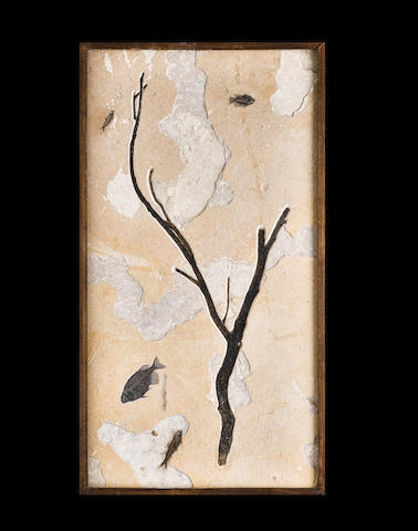 Uncommon Tree Branch with Fishes – Wall Mural