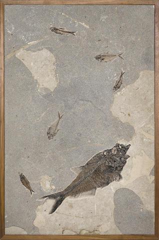 Fossil Fish in Limestone – Framed Mural
