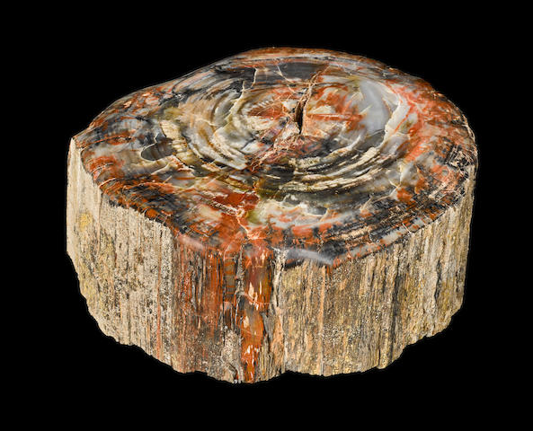 Petrified Wood Log Section
