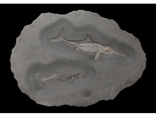 Ichthyosaur with Fish
