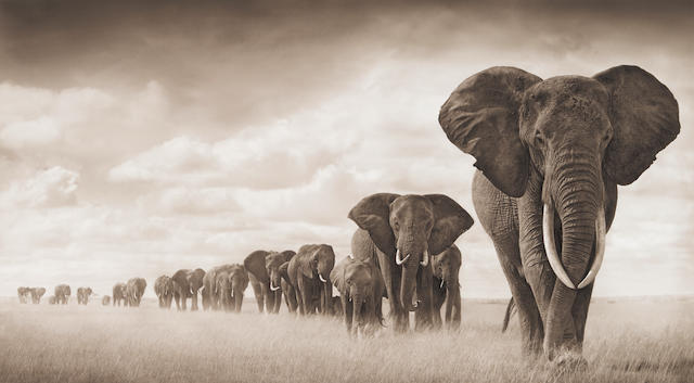 Nick Brandt (born 1966); Elephants Walking Through Grass, Ambroseli;