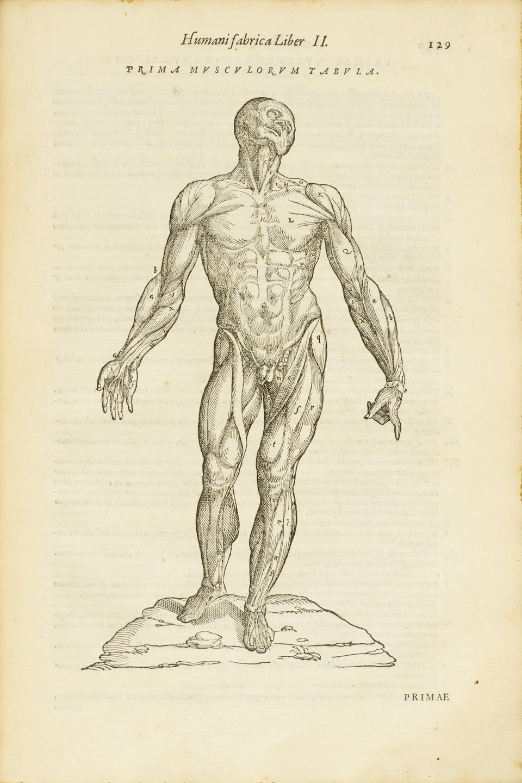 VESALIUS, ANDREAS. 1514-1564.   De humani corporis fabrica.   Venice: Franciscus Francisci  and Johannes Criegher, 1568.
