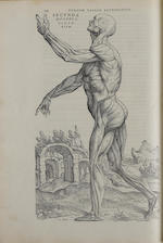 VESALIUS, ANDREAS. 1514-1564.    De humani corporis fabrica libri septem.  Basel: Johannes Oporinus, June 1543.