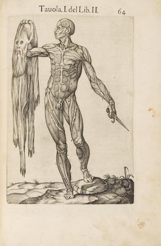 VALVERDE DE HAMUSCO, JUAN DE. Fl. 1560.  Anatomia del corpo humano.  Rome: Antonio Salamanca and Antonio Lafrery, 1560.