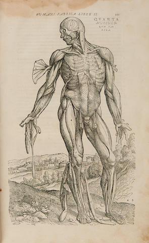 VESALIUS, ANDREAS. 1514-1564.  De humani corporis fabrica libri septem.  Basel: Johannes Oporinus, August 1555.