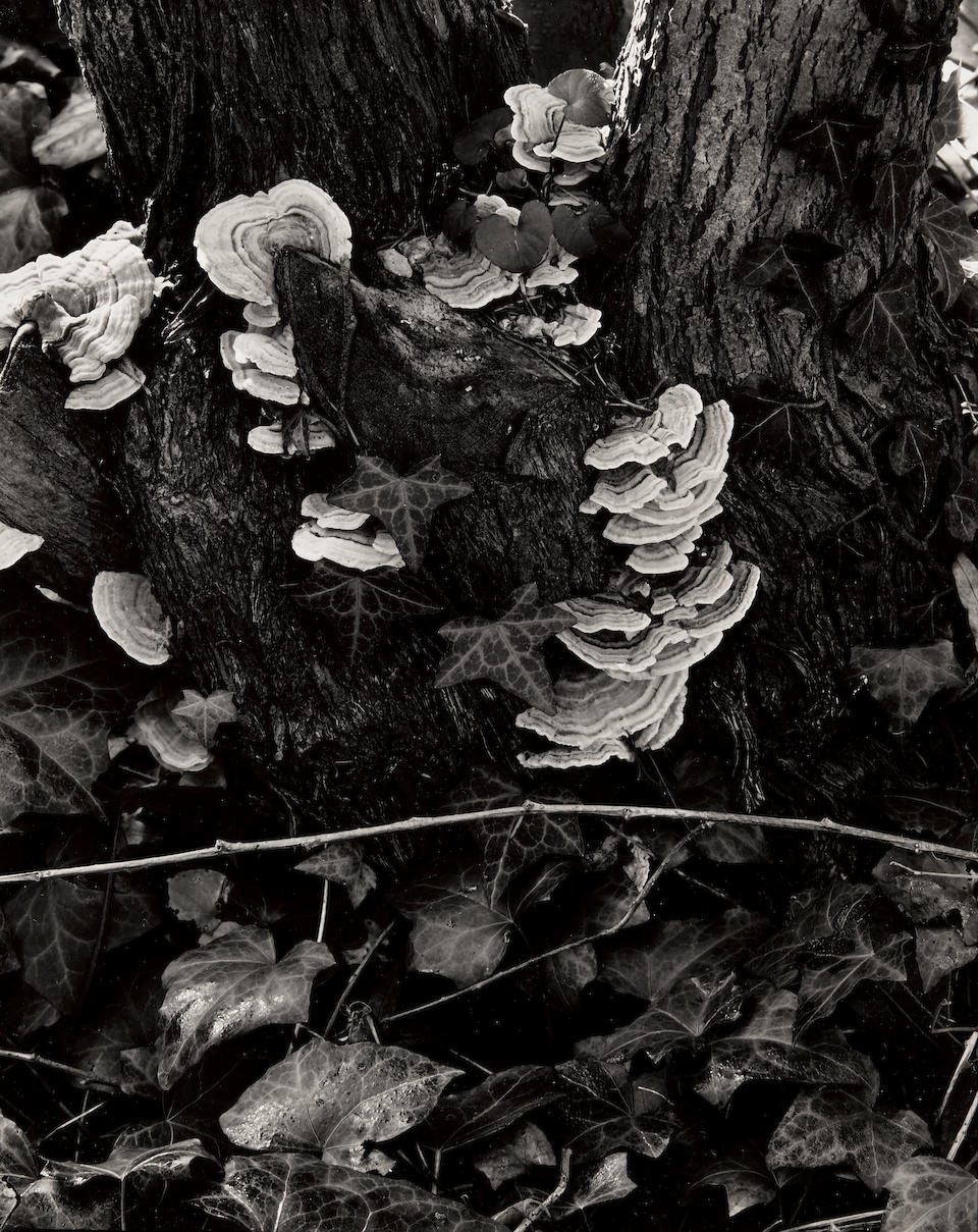 "Paul Strand (1890-1976); ""The Garden"" (Orgeval);"