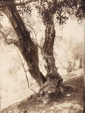 Eugène Atget (1857-1927); Olivier;