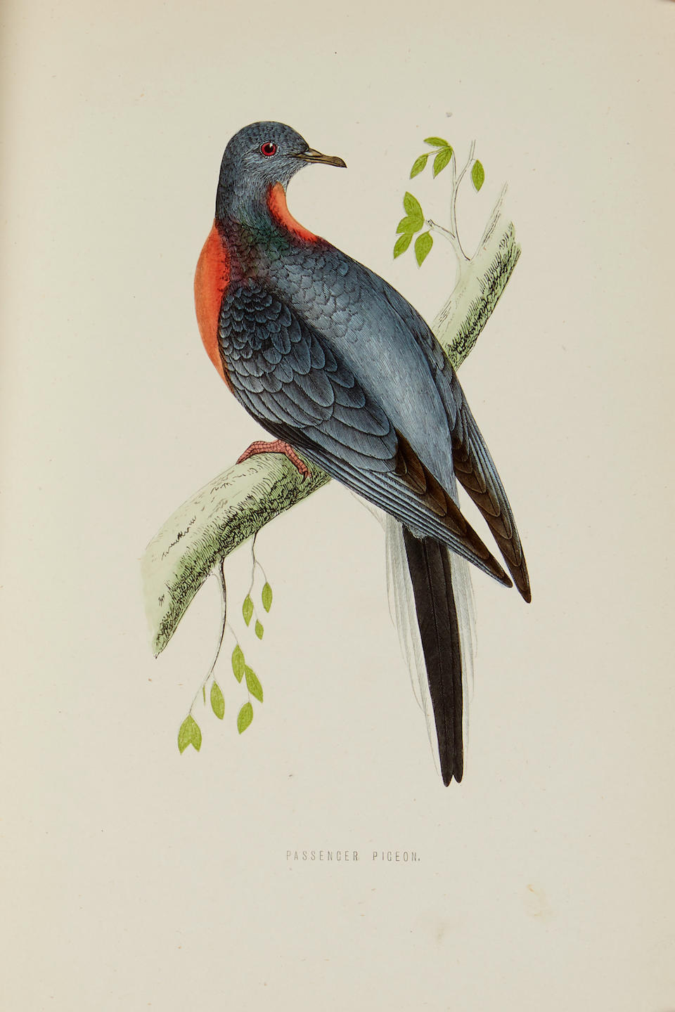 MORRIS, FRANCIS ORPEN. 1810-1893. A History of British Birds. London: Bell and Daldy, 1870.