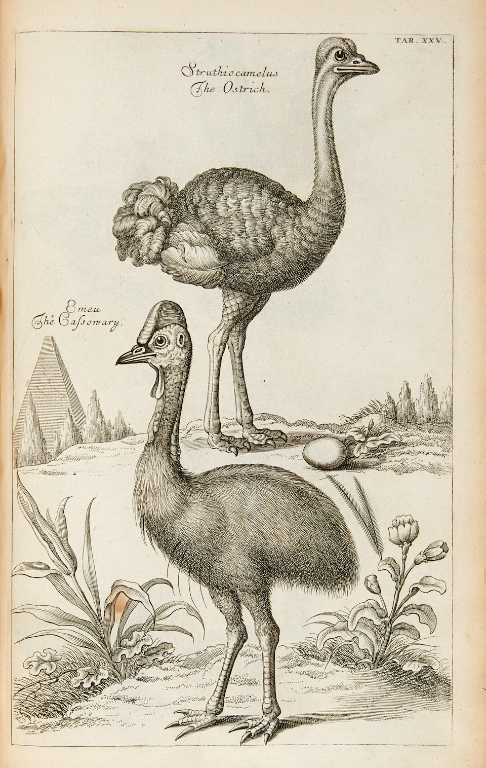 WILLUGHBY, FRANCIS. 1635-1672; AND JOHN RAY. 1627-1705. The Ornithology of Francis Willughby ... in Three Books wherein all the Birds hitherto known. London: John Martyn, 1678.