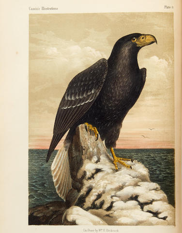 CASSIN, JOHN. 1813-1869. Illustrations of the Birds of California, Texas, Oregon, British and Russian America.  Philadelphia: J.B. Lippincott, 1856.