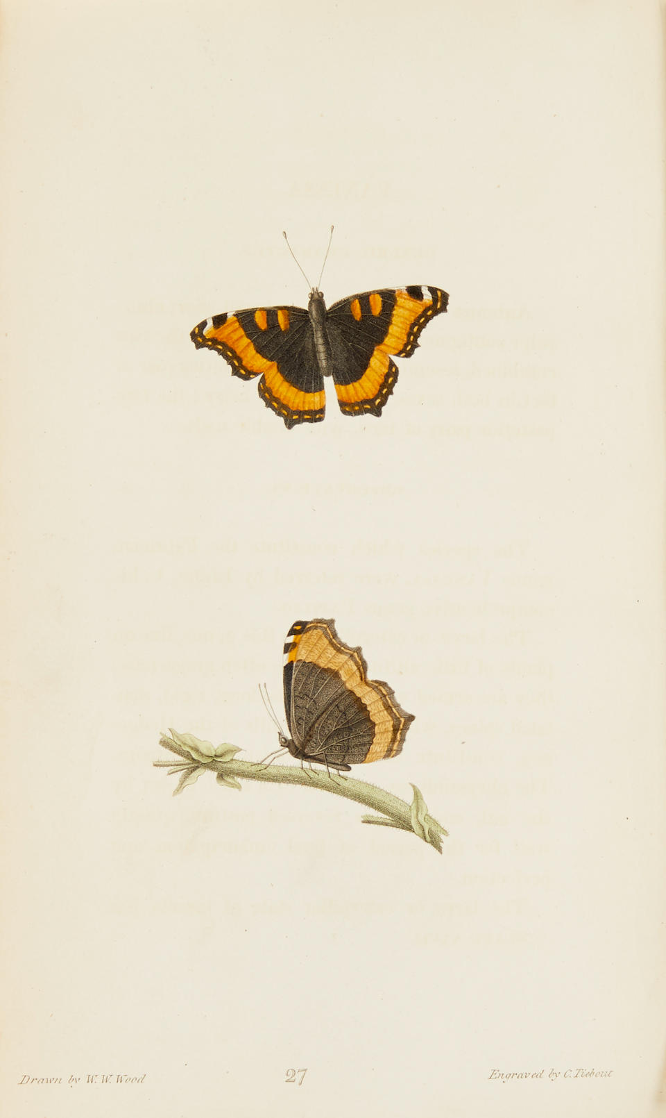 SAY, THOMAS. 1787-1834. American Entomology, or descriptions of the insects of North America. Philadelphia: Samuel Augustus Mitchell, 1824-1828.