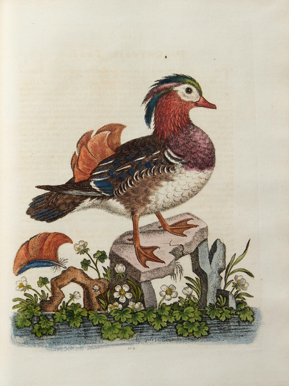 EDWARDS, GEORGE. 1694-1773. Natural History of Uncommon Birds. London: for the Author, [1739]-1751.
