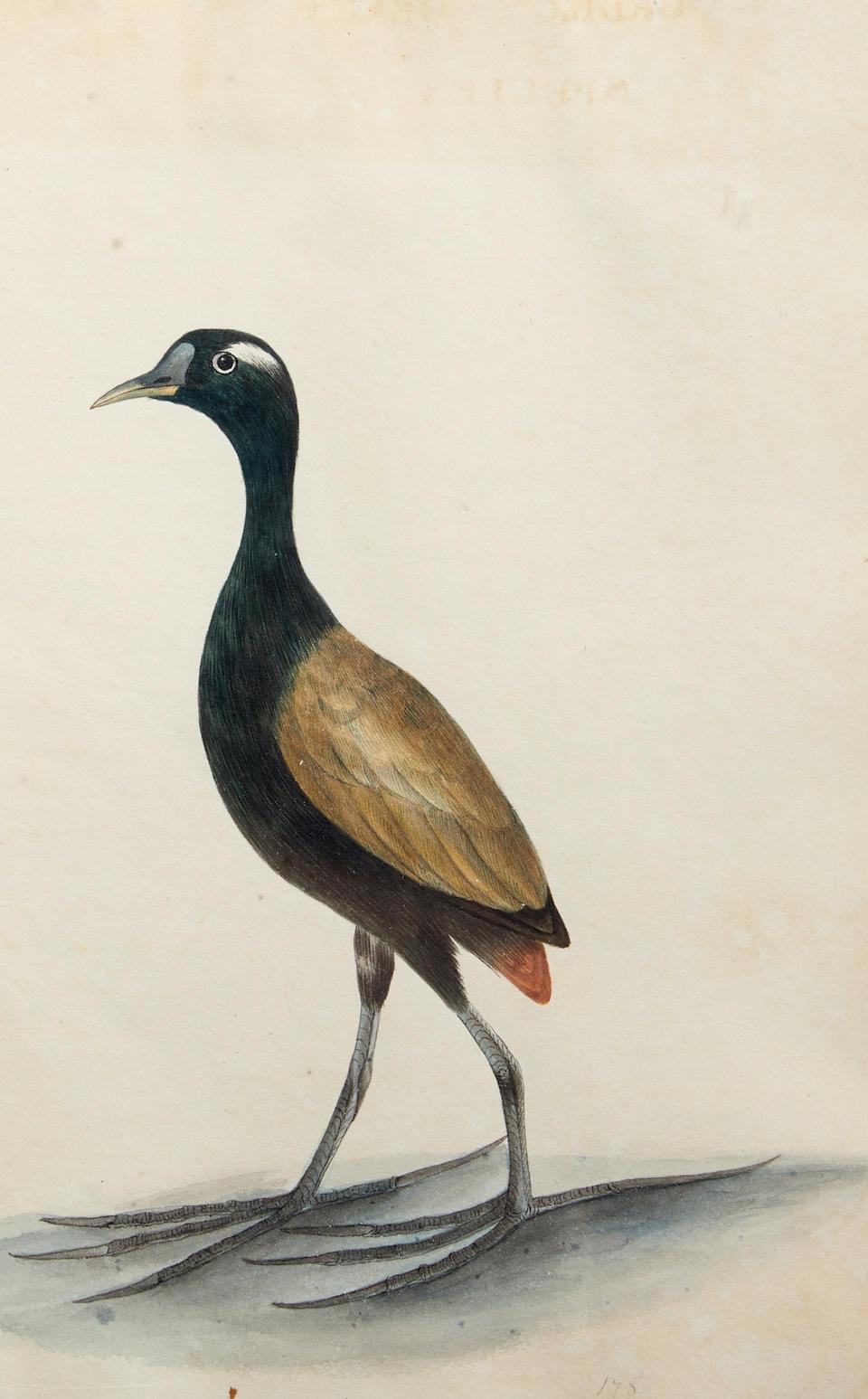 SMITH, CHRISTOPHER WEBB. 1793-1871.  Indian Ornithology. [Patna, India]: dated 1828.