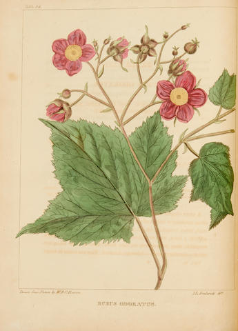 BARTON, WILLIAM P.C. 1786-1856. A Flora of North America, illustrated by coloured figures drawn from nature.  Philadelphia: J. Carey & Sons, 1821-1823.