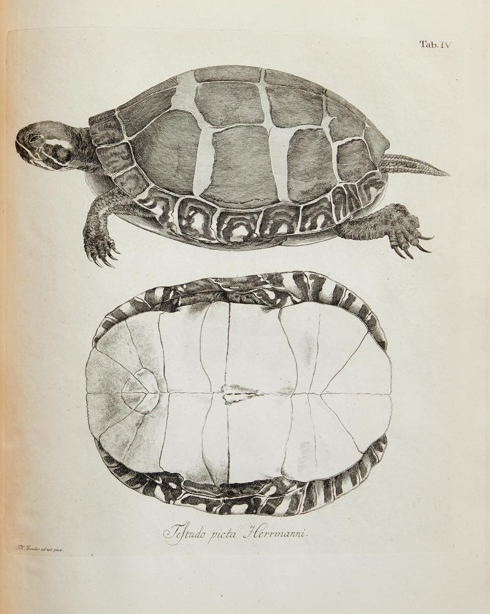 SCHOEPFF, JOHANN DAVID. 1752-1800. Historia testudinum iconibus illustrata. Erlangen: Johann Jacob Palm, 1792.