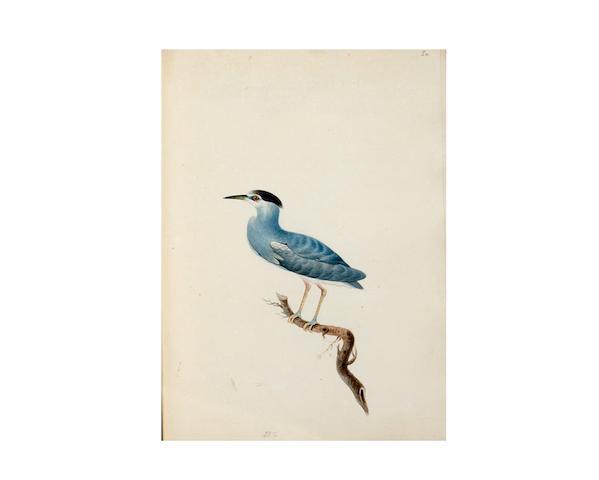 SMITH, CHRISTOPHER WEBB. 1793-1871.  Indian Ornithology. [Patna, India]: 1828.
