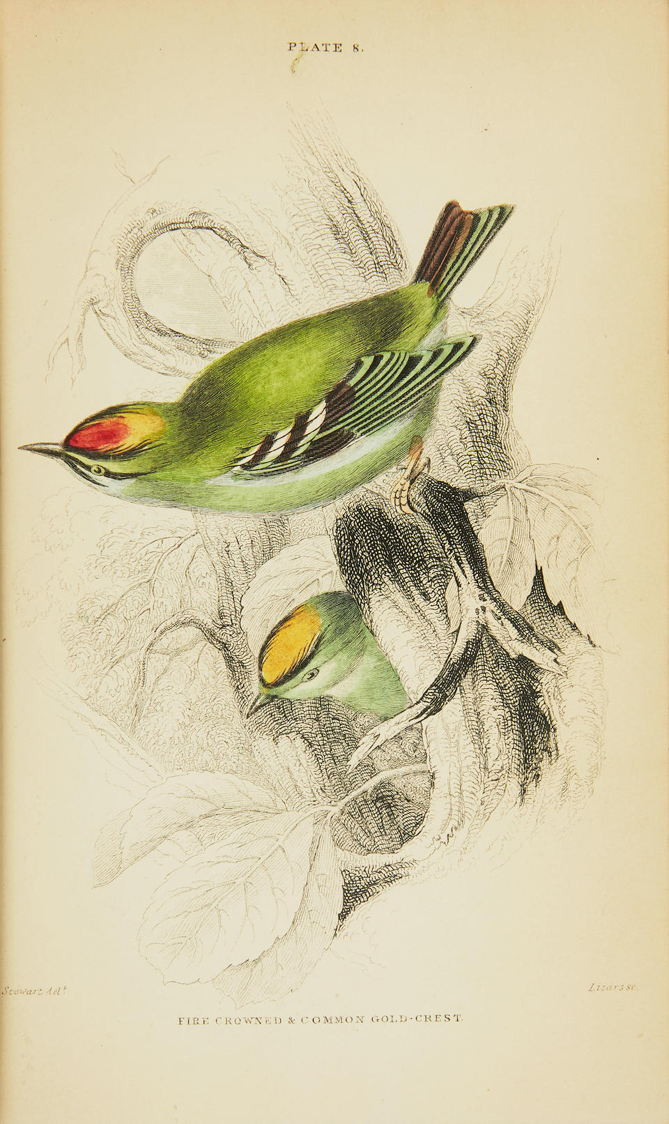 JARDINE, WILLIAM. 1800-1874. The Naturalist's Library. Edinburgh: W.H. Lizars, [1843].