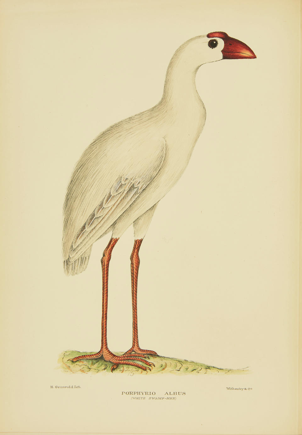 MATHEWS, GREGORY MACALISTER. 1876-1949. The Birds of Norfolk & Lord Howe Islands and the Australasian South Polar Quadrant. London: H.F. & G. Witherby, 1928.