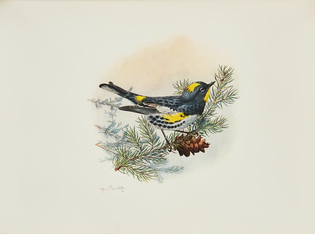 DAWSON, WILLIAM LEON. 1873-1928. The Birds of Washington. Seattle: Occidental Publishing, 1909.