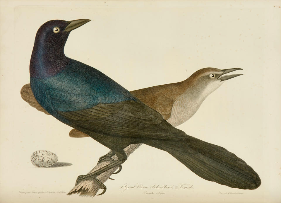BONAPARTE, CHARLES LUCIEN. 1803-1857. American Ornithology; or, the Natural History of Birds inhabiting the United States not given by Wilson. Philadelphia: S.A. Mitchell; Carey & Lea, 1825-1833.