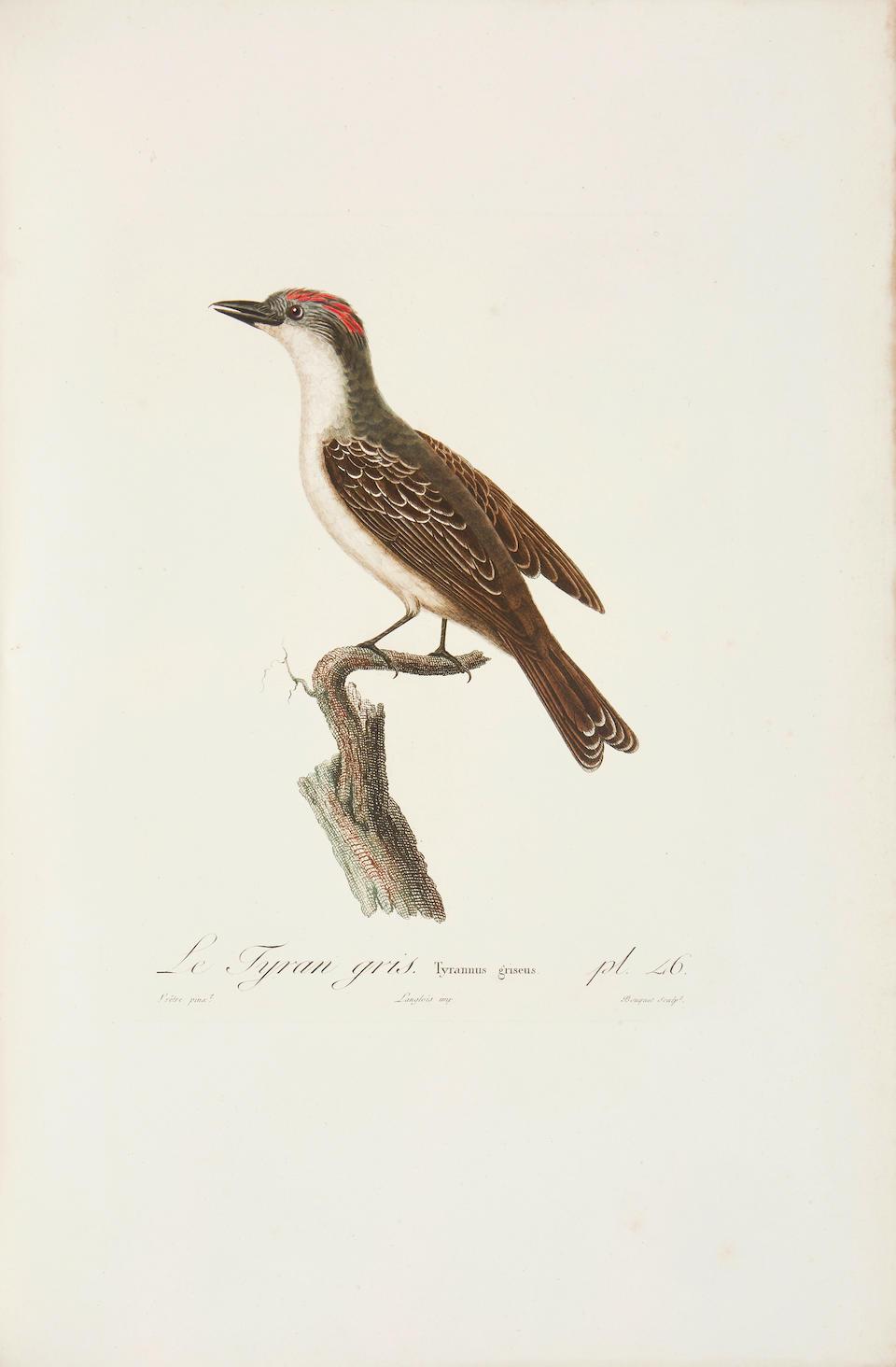 VIELLOT, LOUIS JEAN PIERRE. 1748-1831. Histoire Naturelle des Oiseaux de l'Amerique Septentrionale. Paris: Desray, 1807.